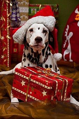Christmas Gift For Dog Groomer