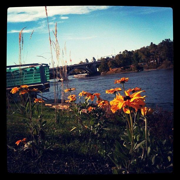 Bow River, Calgary, AB. copyright Jacqueline Auvigne