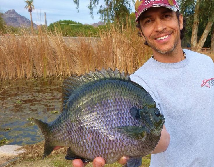 Ladies and gentlemen, Kevin Finley of Phoenix, Arizona with the biggest bluegill I have ever personally seen!