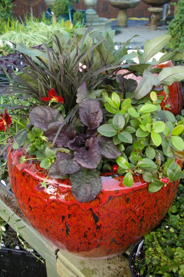 Container Garden Matching Plants To Winter Idea Pike Nurseries