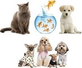 Portail des Animaux et de la Nature - Animaleries et boutiques pour animaux (t-shirts et robes, posters, stickers déco, livres, dvd, cartes postales...) - Jeux en ligne - Sonneries téléphone. Tout pour les Amoureux des animaux !