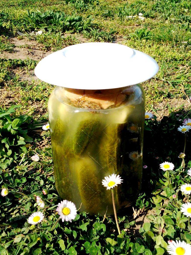 Az én kovászos uborkám, ami nyáron hetente készül