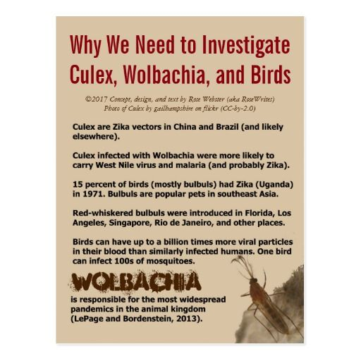 To help fund Zika research. My latest article (with citations): http://www.infobarrel.com/An_Open_Letter_to_Dr_Margaret_Chan_Director-General_of_WHO #Zika #Culex #reservoirhost #bulbuls #Wolbachia #ZIKV