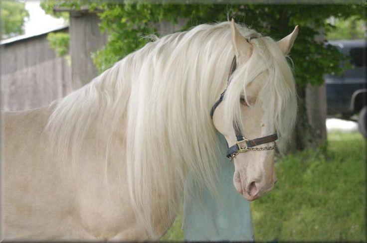 самая красивая лошадь в мире фото: 25 тыс изображений ...