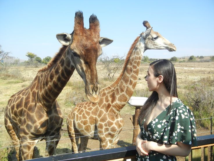 Giraffe talk in the Lions and Rhino Park in Johannesburg, South Africa