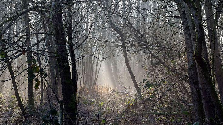 Dawn on Ashton Heath