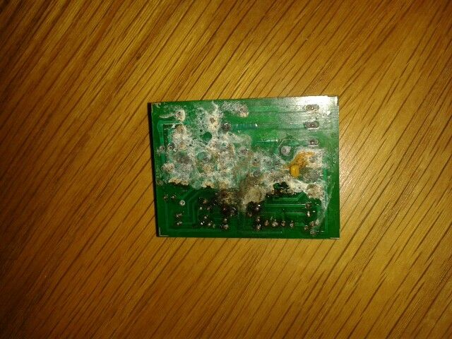 Timer board with snail damage