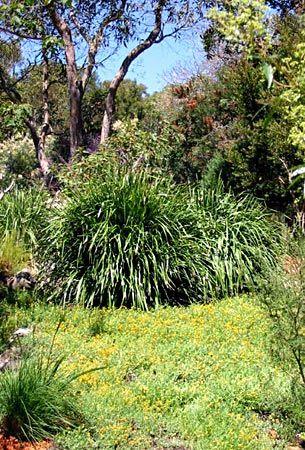 Bush gardens and habitat.
