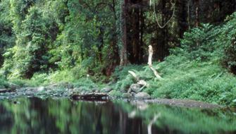 Full Day Walks - O'Reilly's Rainforest Retreat