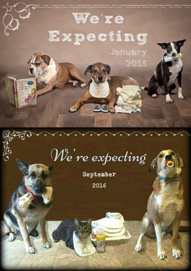 Best 25 Pregnancy Announcement Dog Ideas On Pinterest