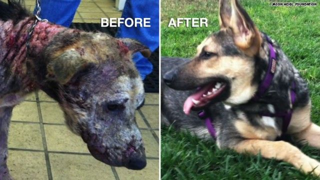 Penelope the dog was left for dead, but a heavy dose of TLC transformed her   both physically and mentally! The Jason Heigl Foundation [1] gets the credit   for Penelope's amazing recovery.   [1] ...