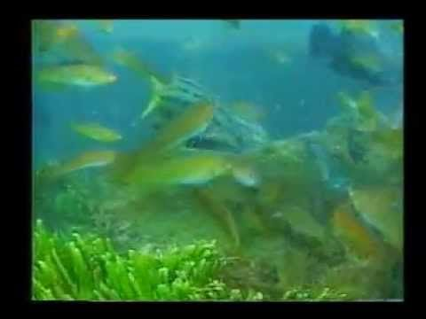 (5) Documental El Mar Peruano y los Dioses de Alejandro Guerrero - YouTube