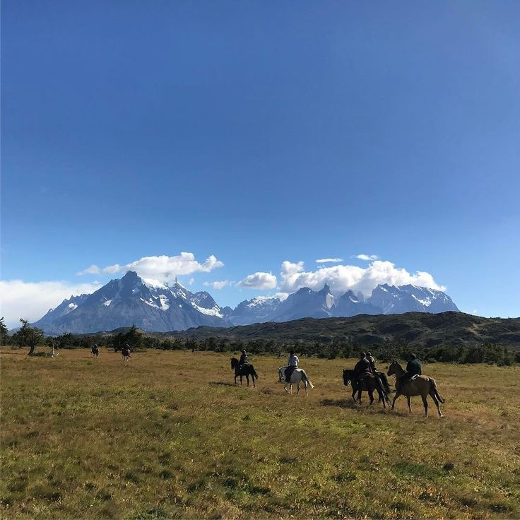 Riding to Glacier Grey Torres del Paine southern Chile #horseridingpatagonia #horse #horseriding #patagonia #holiday #vacation #horsebackriding #ridingholiday #torresdelpaine #guachos #glaciers #glaciergrey