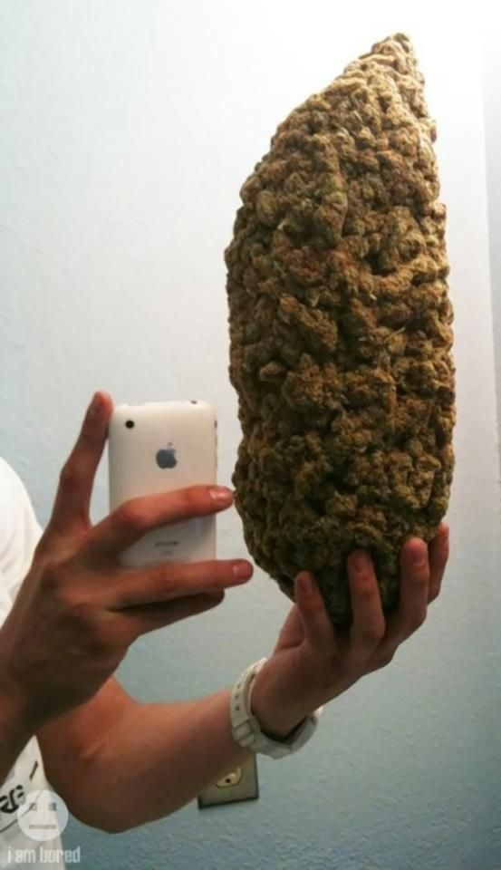 Ohh my what a yield #nuggz #weed