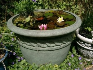 How to create a small garden pond in a container