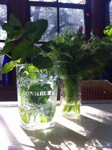 """This blogger says, """"Keep herbs fresh longer by placing them in the fridge inside a glass with a little bit of water in the bottom. Wilt-prone herbs, like dill, might also need a plastic bag placed over the top of the glass.""""  I find that very tender herbs do better just set in a glass of water on the counter, as if you were trying to root them.  In fact, you just might."""