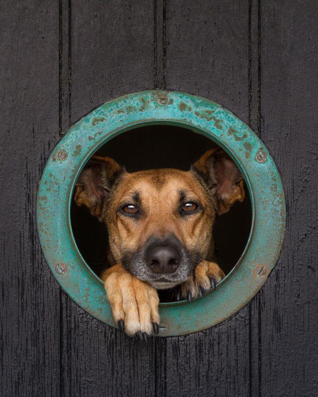 Pin On Dog Photos