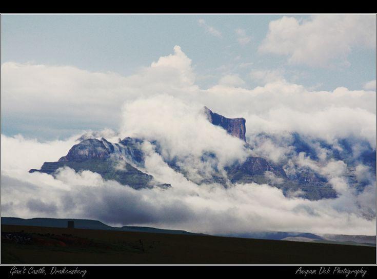 Clouded giant - Drakensberg, KwaZulu-Natal