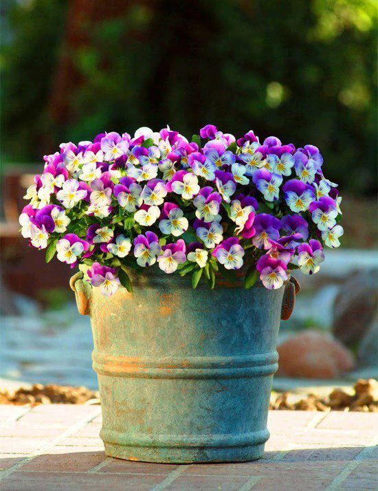 17 best images about potted plants flowers etc for decks and verandas on pinterest container - Potted autumn flowers ...