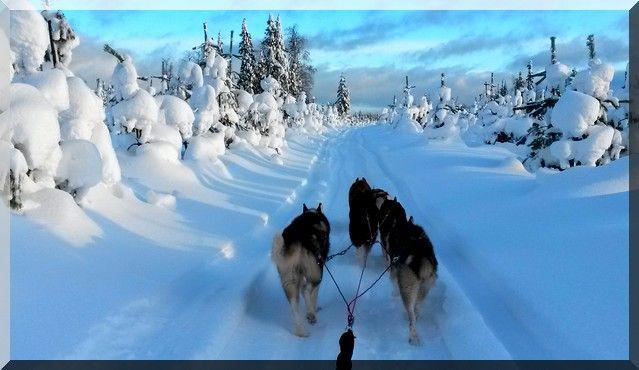 korouoma, Finlande | ... | Voyage, séjour en Laponie Finlandaise, chien de traineau et raid
