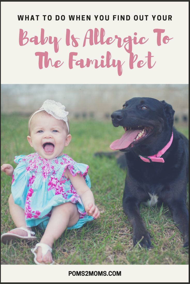 How To Cope When Your Child Has Dog Allergies Kids Allergies