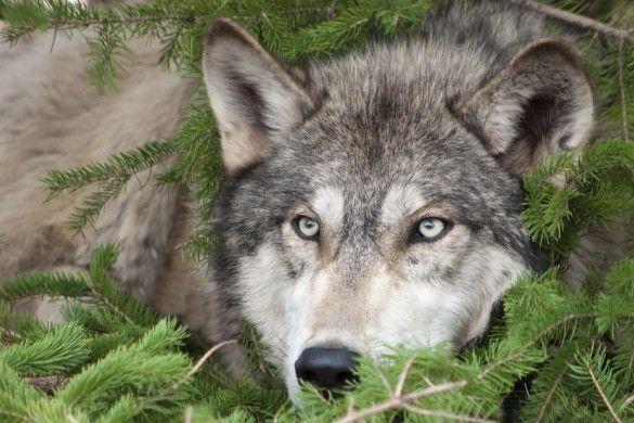 fotky zvířat ke stažení - Hledat Googlem