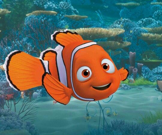 326 best images about finding nemo finding dory on for Finding nemo fish names