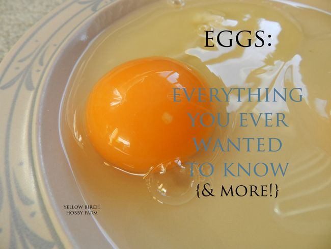 Eggs: Everything You Ever Wanted to Know {& More!} from Yellow Birch Hobby Farm