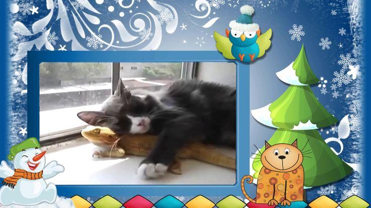 """#Видео #клип #Новогодние #коты Серия 12. #Видеоклип """"Новогодние коты"""". С..."""