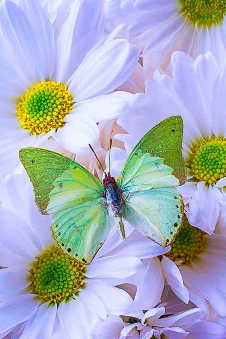 321 best ผ เส อ u0026ดอกไม images on pinterest butterflies flowers