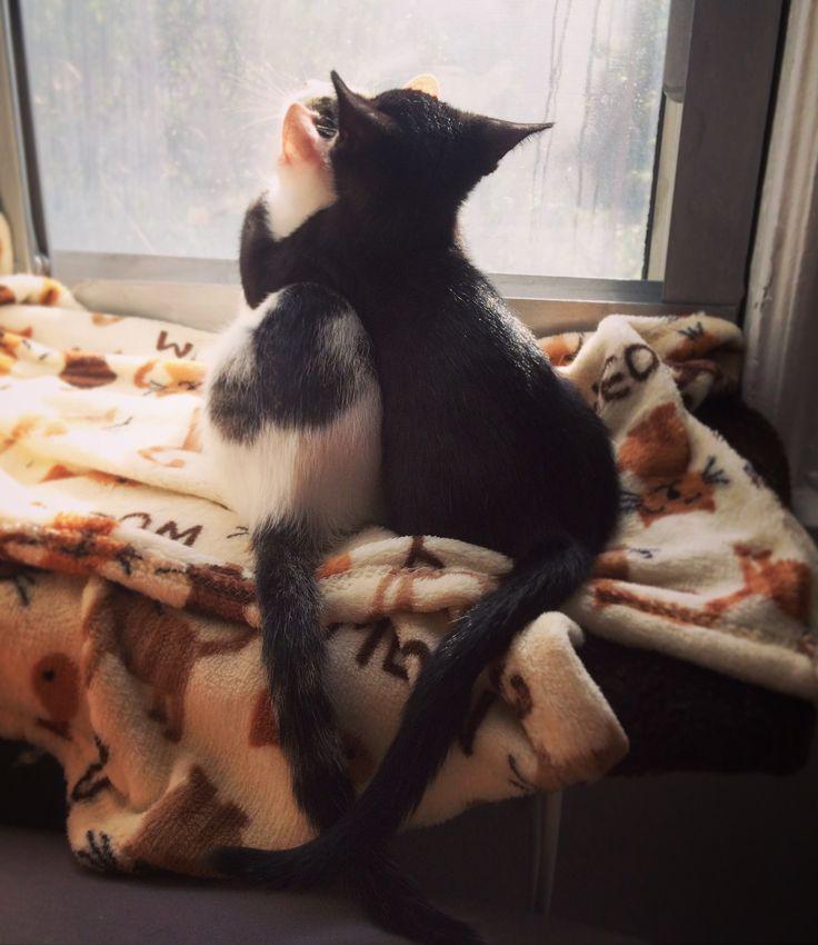 My foster kittens being best buddies - http://cutecatshq.com/cats/my-foster-kittens-being-best-buddies/