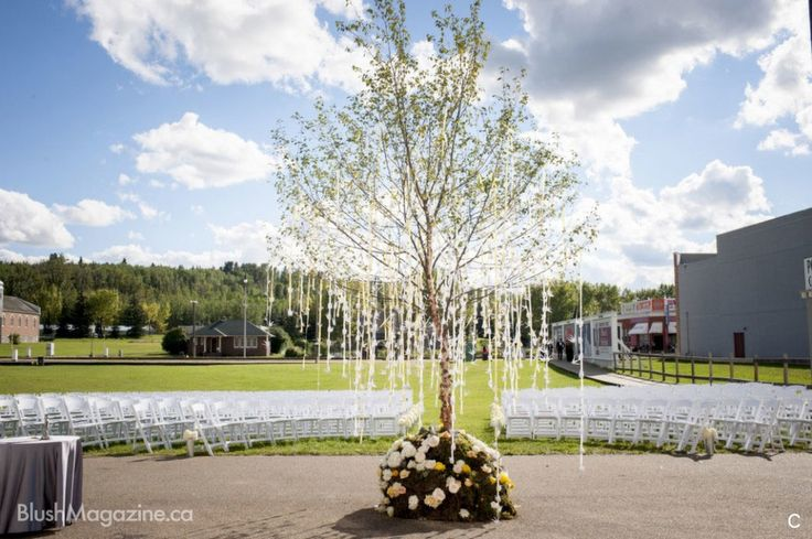 Wedding Ceremony Tree take it home and plant it in your yard to enjoy through your marriage