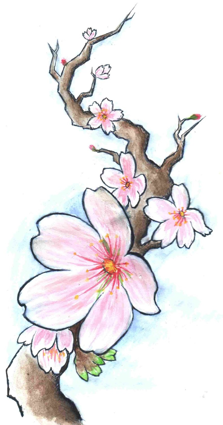 cherry blossom drawing - 648×1232