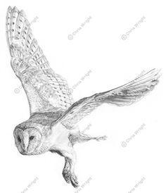 flying barn owl tattoo - Google Search