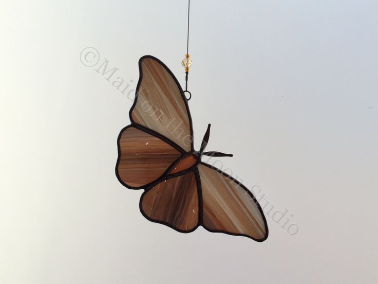Stained Glass Moth - White & Brown Moth