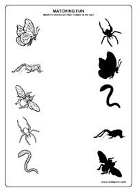 Insects Worksheets,Kids Printable Activities,Insects Matching Worksheets