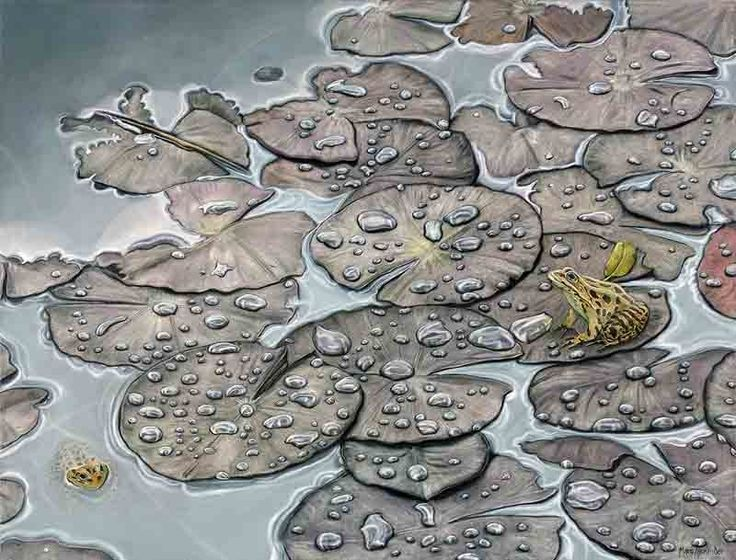 Leopard Toads, Oil on Canvas, 68cm by 88cm, (2014) by Marc Alexander