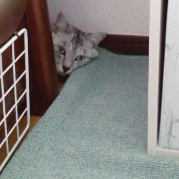 凛🐱いないなぁ~と思っていたら………bedの隅でイジケテ(笑)おりました🎵  #猫 #猫すき  #愛猫 #愛猫家 #可愛い💕  #かわいい  #にゃんこ  #にゃん部  #にゃん  #ニャンズ #もふもふ #もふもふ部 #アメショ部  #アメショ #ニャン #友達 #にゃんすたぐらむ  #cat #catsofinstagram #だいすき #cats