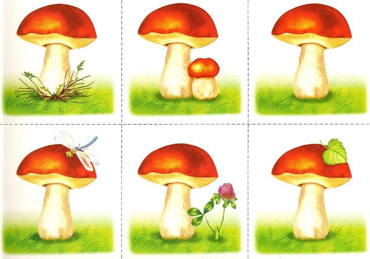 Картинки грибы для занятий