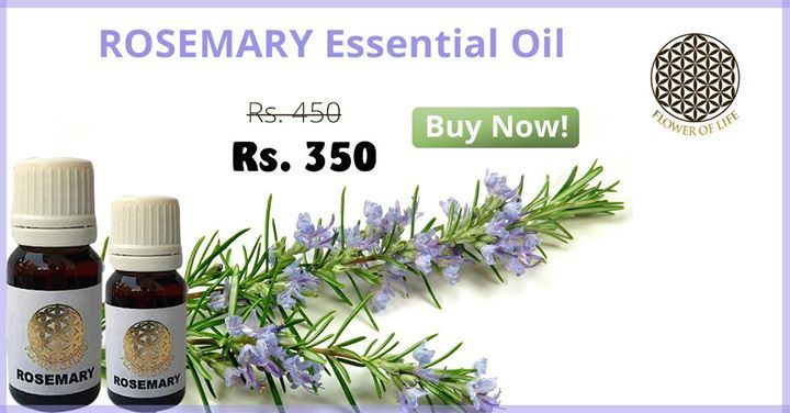 #Rosemary essential oil is excellent to cure premature greying, hair loss & scalp conditions. http://www.shophealthy.in/Swati-Soaps/flower-of-life-rosemary-essential-oil-10ml