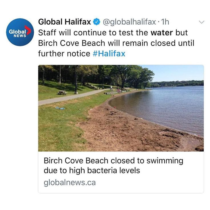 from @globalhalifax  The Halifax Regional Municipality has closed the Birch Cove Beach citing a high bacteria level in the water. . Recent tests carried out by the citys beach supervisors found that the quantity was higher than Health Canadas guidelines. . According to the city weather conditions and the number of waterfowl can contribute to the bacteria levels.  Staff will continue to test the water but the beach will remain closed until further notice.