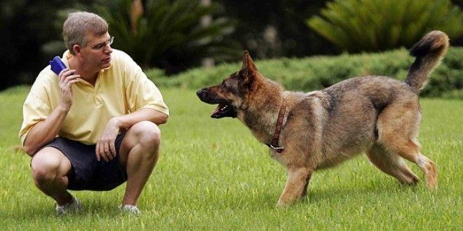 10 Basit Adımda Köpek Eğitimi