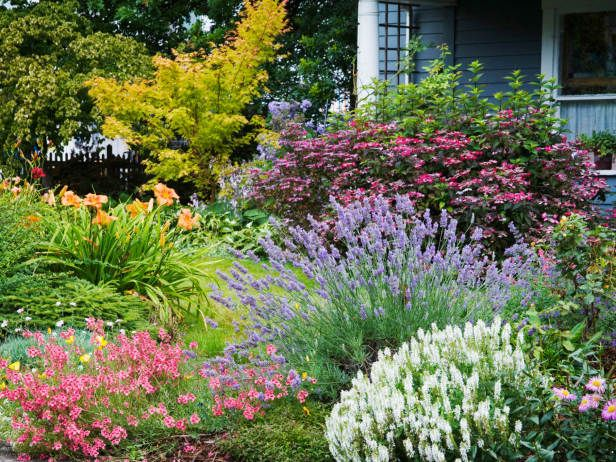 Evergreen Herbs Like Purple Leaf Sage And Lavender Are