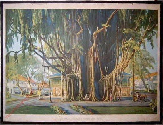 Ons schoone Indie 1 - Waringinboom en Hotel des Indes