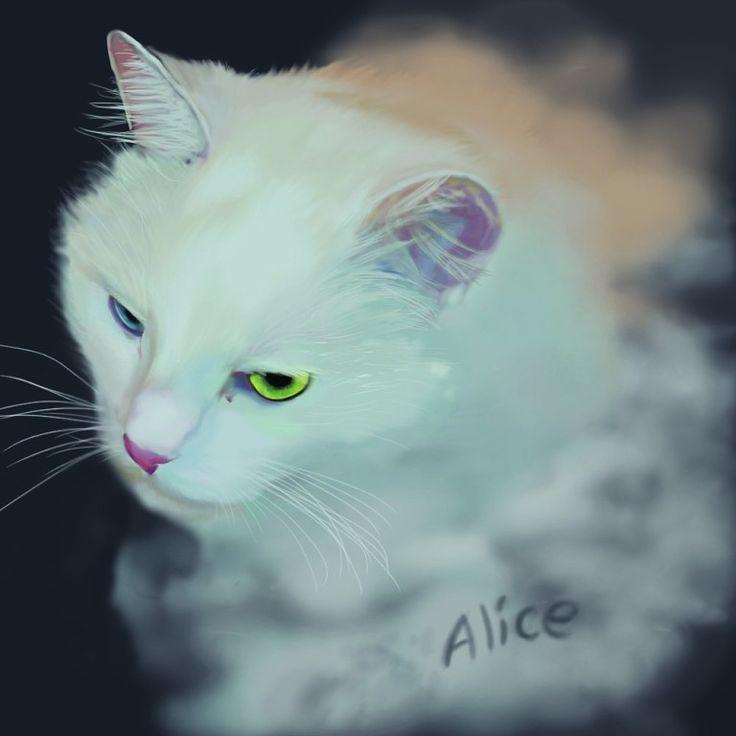 Alice / my cat