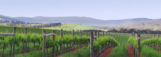 Sometimes you are in the right place at the right time. But to be honest, it isn't hard in the Yarra Valley :)