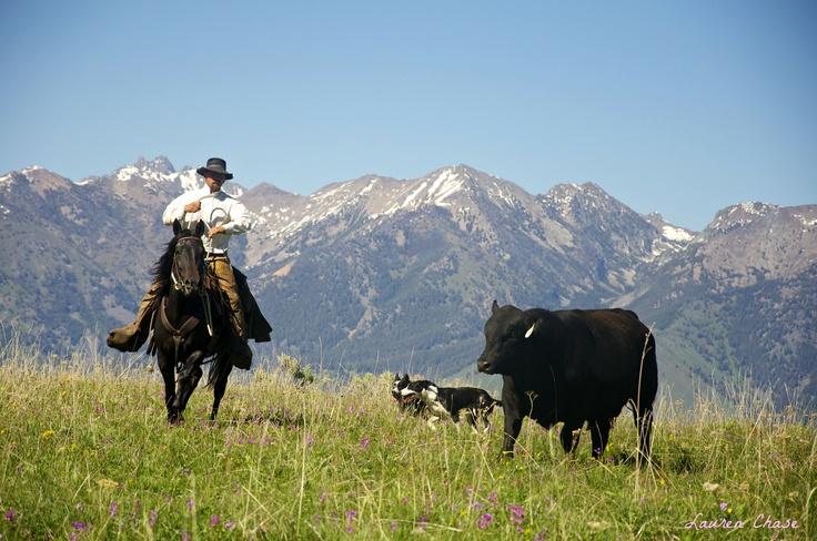 Montana ranching - Cowboy, Kurt Puckett