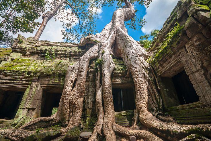 Ta Prohm temple at Angkor, Siem Reap, Cambodia