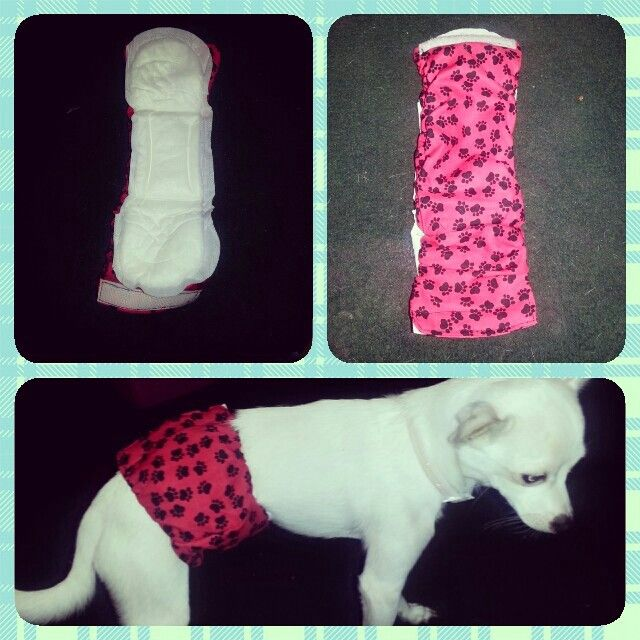 Best 20 Diy Dog Diaper Best Collections Ever Home Decor