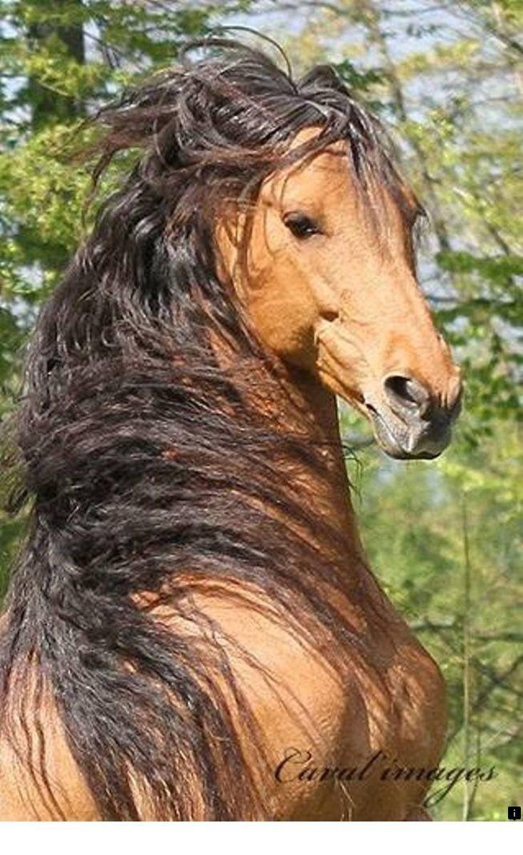 ^^ Willst du mehr über Pferdeliebhaber wissen. Klicken Sie auf den Link, um weitere Informationen zu erhalten ** …   – Horses